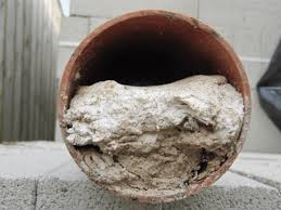 Wet Wipes In Reading Drain