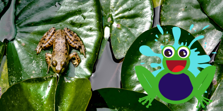 Frogs in Drains