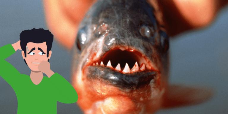 Piranha in drains