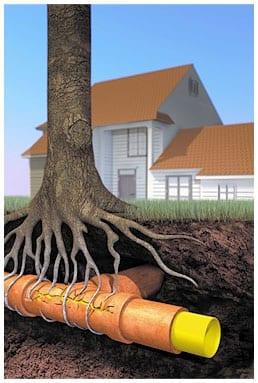 London root drain repair